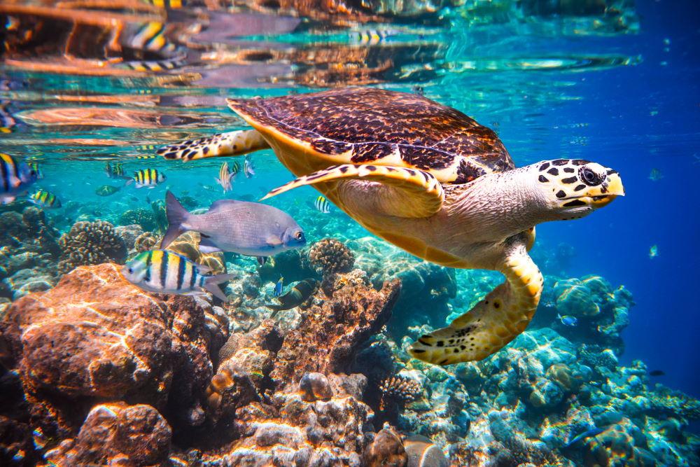 Фото: подводный мир Мальдив