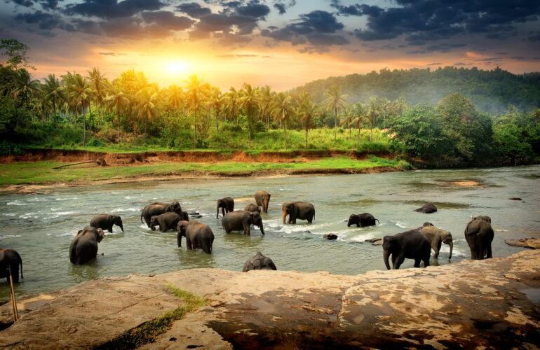 Фото: Отдых на Шри-Ланке