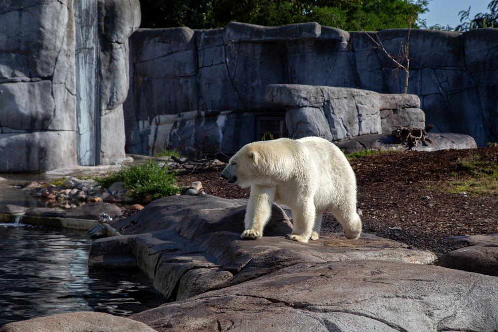 Фото: Зоопарк в Копенгагене