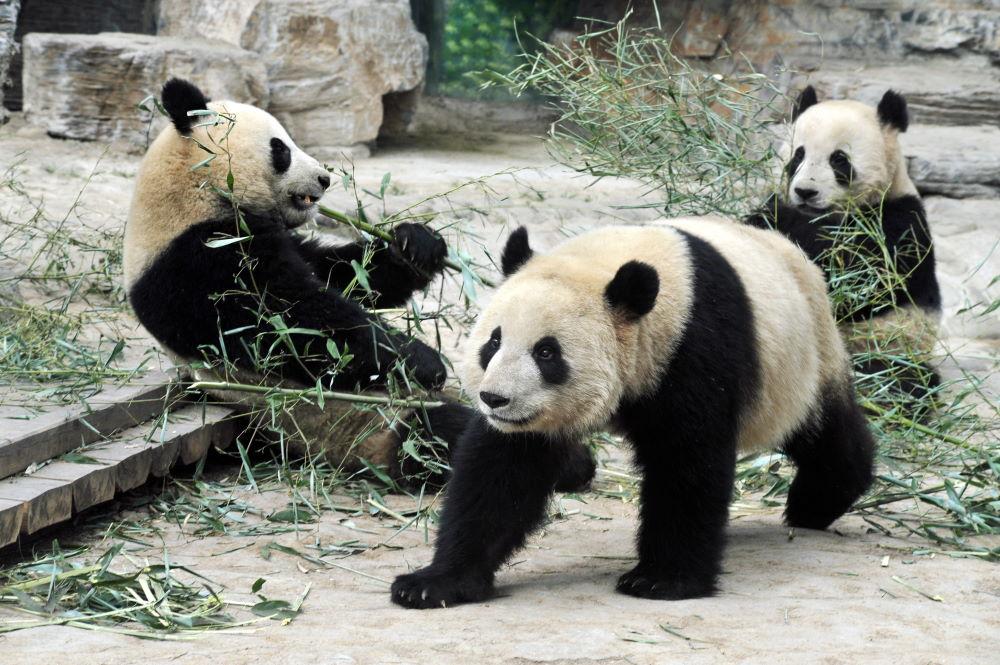 Фото: Пекинский зоопарк