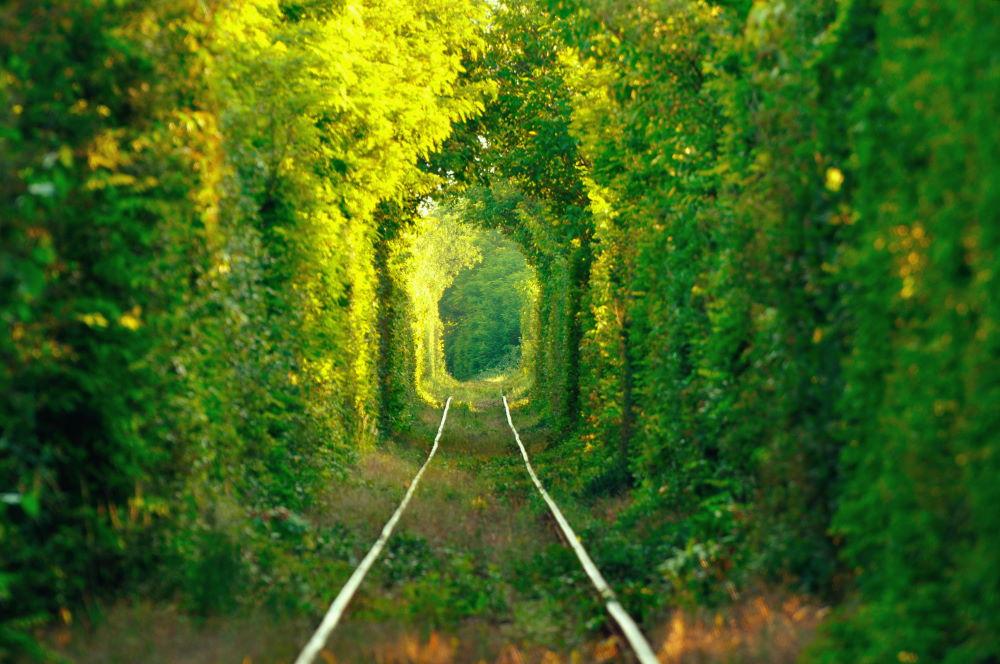 Фото: Тоннель любви
