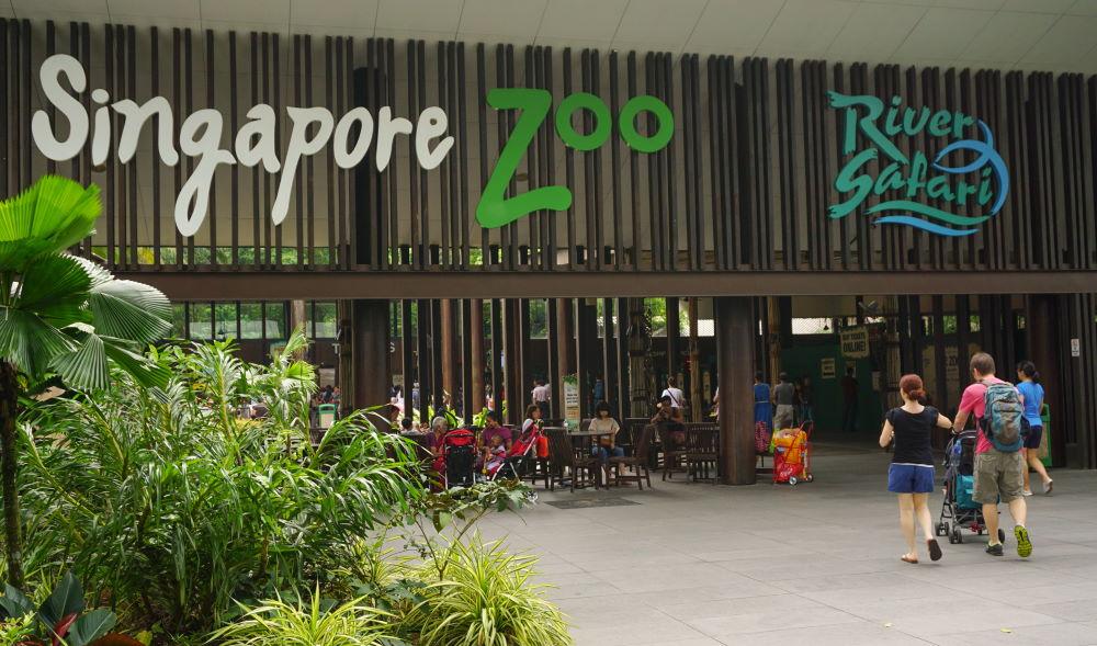 Фото: Сингапурский зоопарк